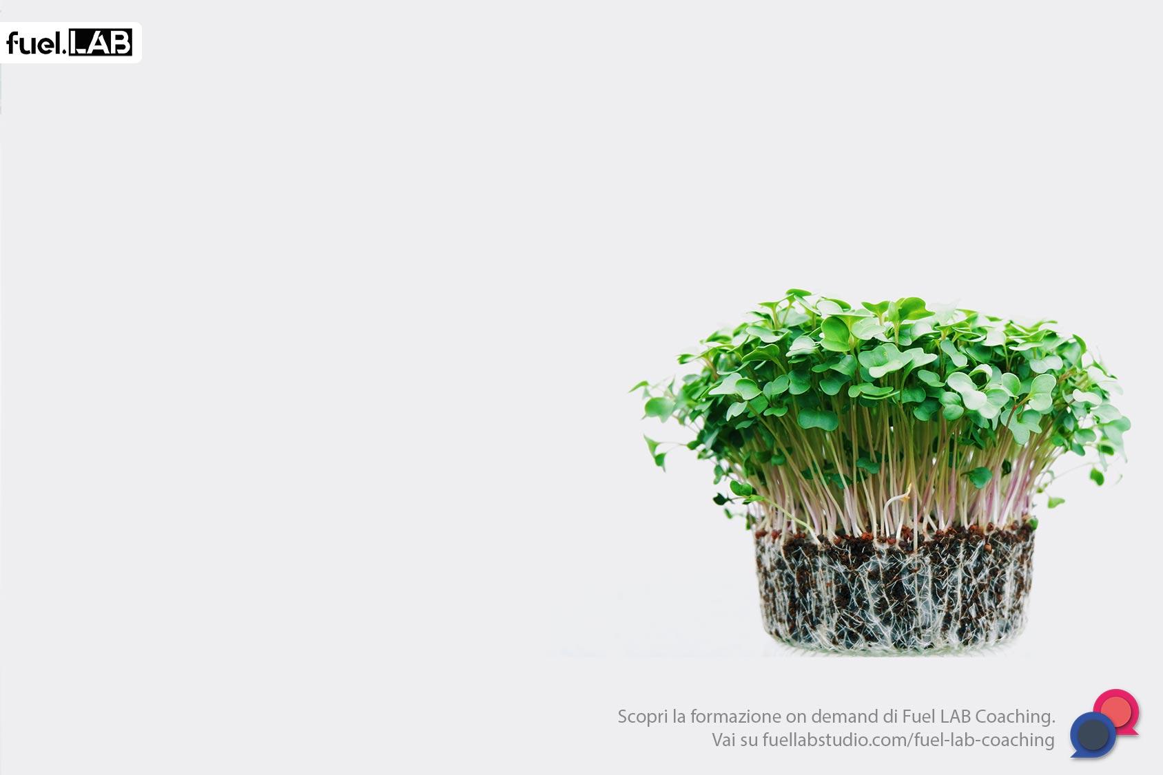 xFarm e la BlockChain per l'agricoltura sostenibile